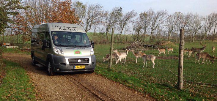 Bustur til Hassing Hjortefarm