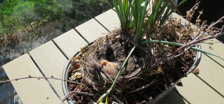 Fugle på altanen